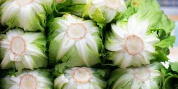Vacinas para salada? Cientistas loucos querem cultivar
