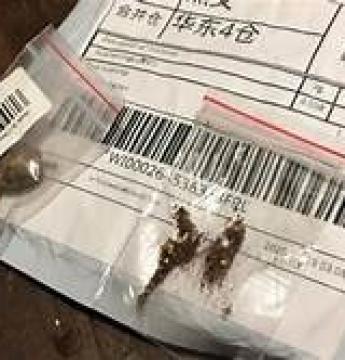 As sementes recebidas como brinde de sites chineses continham pragas causadoras de danos fitossanitários.