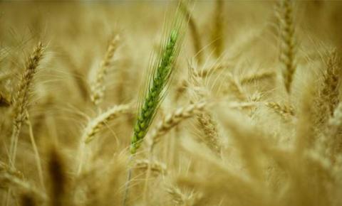 Política, joio e trigo