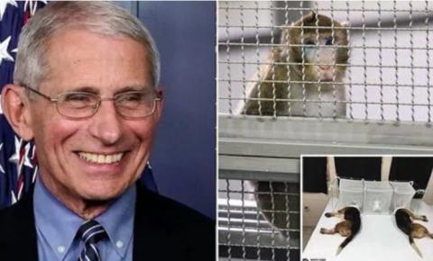 """DR MORTE: NIH de Fauci deu 'injeções tóxicas no cérebro' para macacos; """"Buracos perfurados em seus crânios e dispositivos implantados no cérebro"""""""